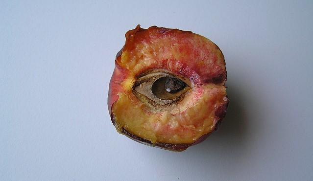 fruchtauge640